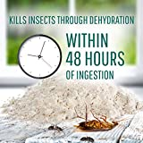 Safer 51703 Diatomaceous Earth-Bed Bug