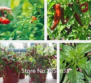 Garden Plant top sale 200pcs/bag Hot mixed hot pepper including Ghost Peppers Chili Rare Sowing Bhut Jolokia Balcony Vegetable S