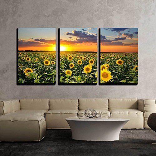 wall26 - 3 Piece Canvas Wall Art - Field of Blooming Sunflowers on a Background Sunset - Modern Home Decor Stretched and Framed Ready to Hang - 24