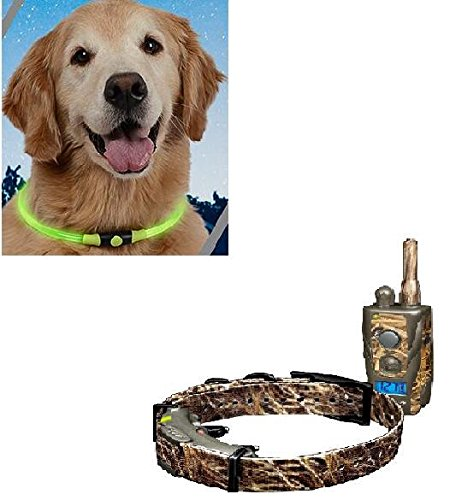 Dogtra Arc Wetlands Camo with Free Nite Ize Glow Collar For Sale