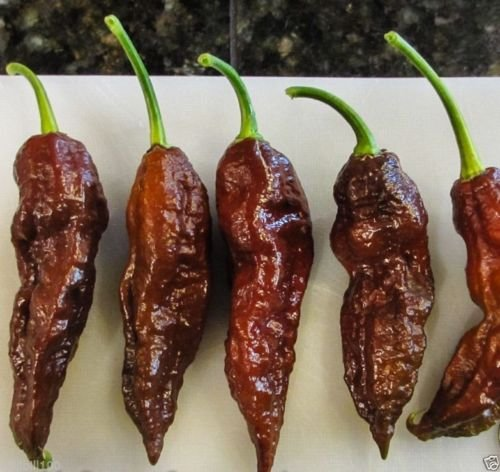- 20 Chocolate Bhut Jolokia Seeds/Ghost Chile - brown version of the Ghost pepper