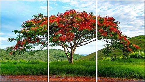 (Flamboyant tree 3 panel stretched canvas wall art. Tropical Island original photography print.)