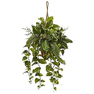 Nearly Natural Mixed Pothos and Boston Artificial Fern Green 14