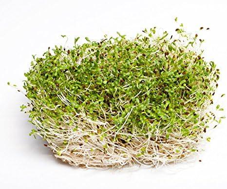 Bio Saatgut Luzerne Gras 10 kg ÖKO mehrjährig Ackerfutterbau Silierung Heu Saat