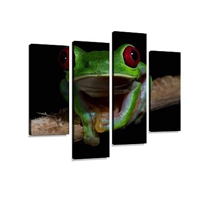 Amazon.com: Red-Eyed Treefrog (Agalychnis callidryas), Drake ...