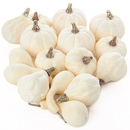 Factory Direct Craft 16 Assorted Harvest Off White Artificial Gourds and (Fall Harvest Pumpkin)