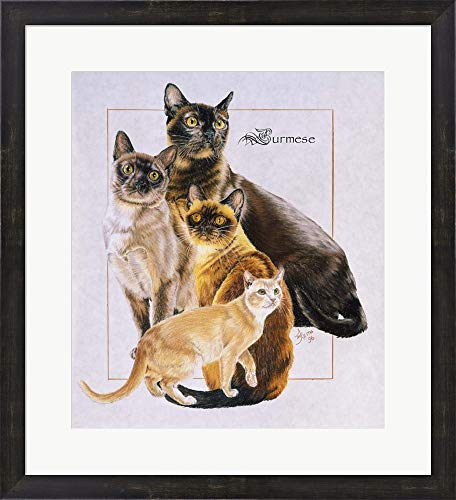 - Burmese by Barbara Keith Framed Art Print Wall Picture, Espresso Brown Frame, 23 x 25 inches