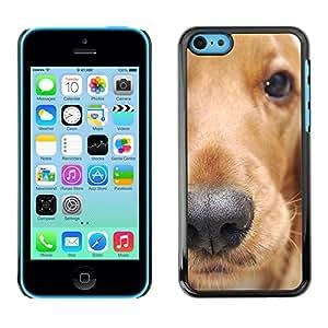 Paccase / SLIM PC / Aliminium Casa Carcasa Funda Case Cover - Golden Retriever Dog Animal Pet - Apple Iphone 5C