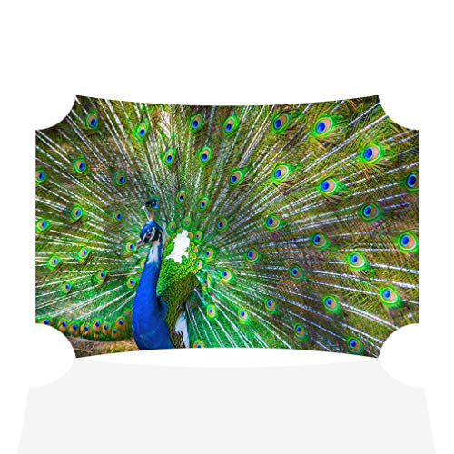 Sign Destination Aluminum Metal Wall Decor Birds Beautiful Peacock with Feathers Out Horizontal Animals Photo Print Wall Art - Berlin Shape, 21