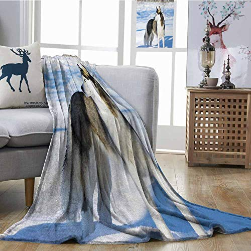- Hypoallergenic Blanket Alaskan Malamute Chukchi Husky Breed Dog on Snow Covered Rural Winter Landscape All Season for Couch or Bed W70 xL93 Black White Pale Blue