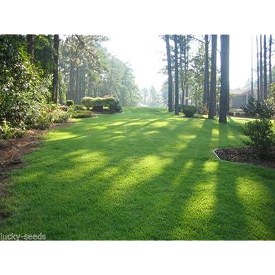 Zenith Zoysia Grass Seed 100% Pure 1/2 Lb. (Plants - 500 Sq.ft.) : Garden & Outdoor