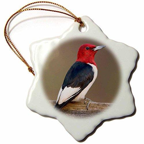 OneMtoss Danita Delimont Birds Red Headed Woodpecker on Fence Marion, Illinois, USA. Snowflake Porcelain Ornament