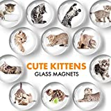 Funny Glass Magnets for Refrigerator - Cat Decorative Magnets for Fridge and Whiteboard - Cute Fridge Magnets for Classroom, Office and Kitchen - Locker Magnets for Boys and Girls