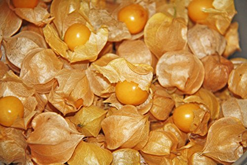 - 100 Seeds, Ground Cherry Seed