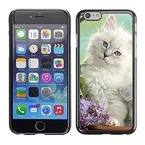 TopCaseStore / la caja del caucho duro de la cubierta de protección de la piel - White Spring Kitten Angora Siberian Cat - Apple iPhone 6