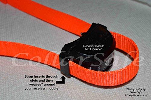 Buy collarsafe replacement collar