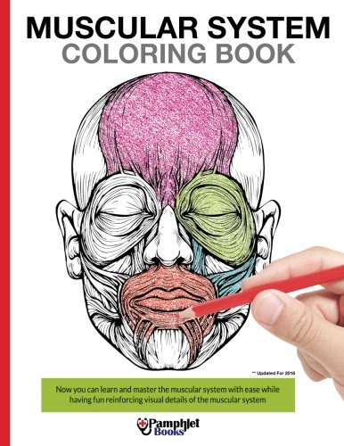 Muscular System Coloring Book: With colored illustrations like what you see on the back page