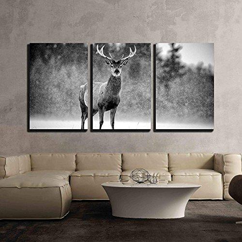 Red Deer Stag Cervus Elaphus in The Scottish Winter Snow Black White Image x3 Panels