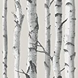 Tools & Hardware : Birch Tree Peel And Stick Wallpaper