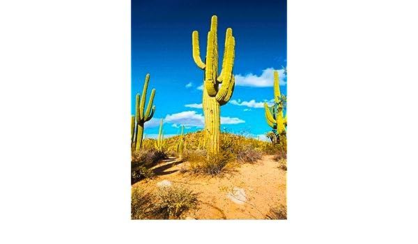 Saguaro Cactus 2 3D Postcard  Greeting Card Sonoran Desert Plant