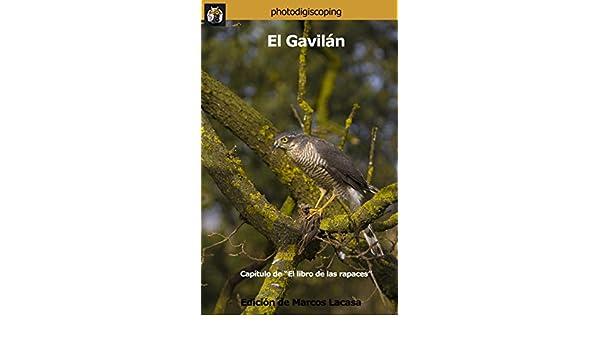 Amazon.com: El Gavilán: El fantasma del bosque (El libro de las rapaces nº 9) (Spanish Edition) eBook: Marcos Lacasa, Andrés Miguel Domínguez, ...