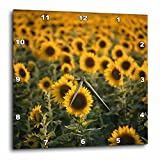 3dRose dpp_210046_1 France, Vaucluse, Sunflowers Field Wall Clock, 10 by 10″ Review