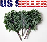 200 seeds ORGANICALLY GROWN Russian Red or Ragged Jack Kale Seeds...