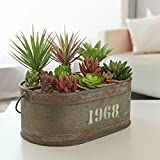 Industrial Style Metal Planter Display Bucket, 6 Compartment Decorative Box, Gray
