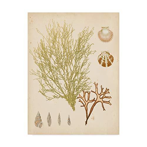 Trademark Fine Art Coastal Relic Ii by Vision Studio, 35x47-Inch