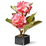 National-Tree-10-Inch-Pink-Hydrangea-Flowers-with-Black-Square-Ceramic-Base-NF36-5063P-1