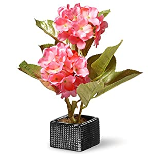 National Tree 10 Inch Pink Hydrangea Flowers with Black Square Ceramic Base (NF36-5063P-1) 9