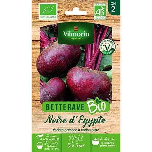 Sachet graines Betterave Noire dEgypte Bio Beta vulgaris