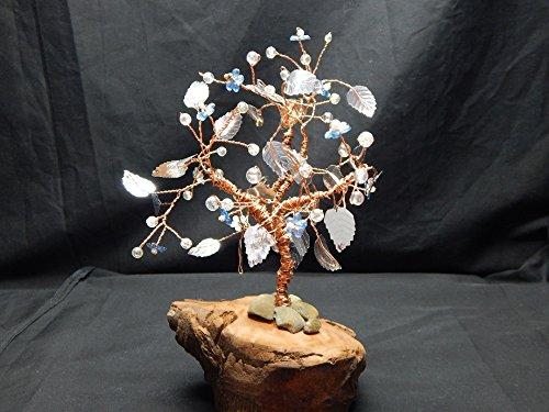 Copper Beech Tree - 5
