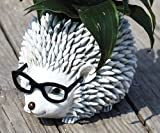 Woodland Critters with Eye Glasses Novelty Planters (Hedgehog)