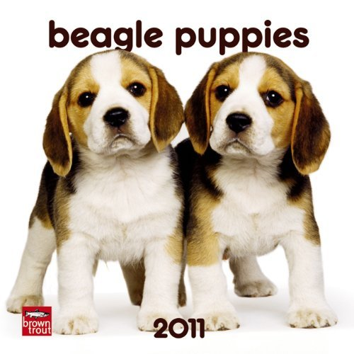Beagle Puppies 2011 7X7 Mini Wall by BrownTrout Publishers Inc - Beagle Calendar 2010