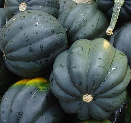 Squash Seeds- Table Queen Acorn- Heirloom- 40+ Seeds