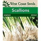 Scallion Seeds - Kincho