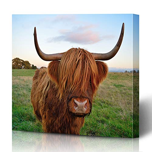 Ahawoso Canvas Prints Wall Art 12x16 Inches Sweet Brown Cow Highland Cattle Parks Red Look Scottish Agriculture Beef Breed Cute Design Decor for Living Room Office Bedroom