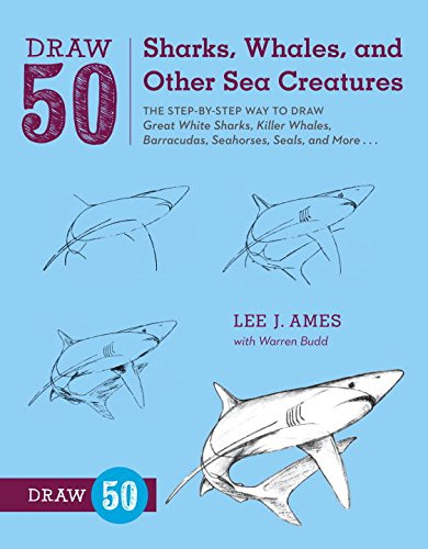 red sea sharks - 8