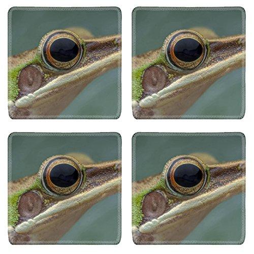 - Luxlady Square Coasters Non-Slip Natural Rubber Desk Coasters White lipped frog Hylarana labialis at the night IMAGE ID 27569868