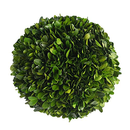 (BoxWoodLand Real Boxwood Plant Wreath, Ball, Cone Tree, Wedding Home Decoration, Realistic Full Green Plant, Indoor Décor(Ball, 8''))