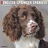 img - for Just English Springer Spaniels 2020 Wall Calendar (Dog Breed Calendar) book / textbook / text book