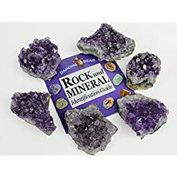 Amethyst Crystal Clusters Rocks (6 pc), each measures approx 2-2.5 inches, BONUS: Rock & Mineral Book and Educational Information ID card included! Druzy, Bulk, Healing, Reiki, Chakra, Dancing Bear