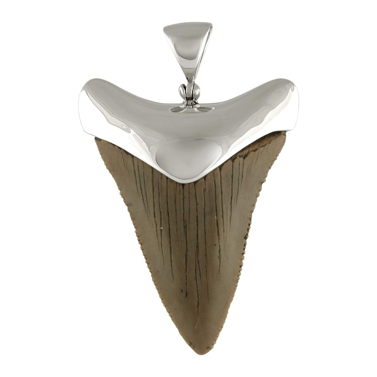 Top 10 Great White Shark Tooth Necklace