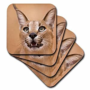 Danita Delimont - Cats - Livingstone, Zambia. Portrait of a Caracal. - set of 8 Coasters - Soft (cst_225166_2)