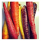 buy David's Garden Seeds Carrot Rainbow Blend SL2279 (Multi) 500 Non-GMO, Open Pollinated Seeds now, new 2020-2019 bestseller, review and Photo, best price $6.95