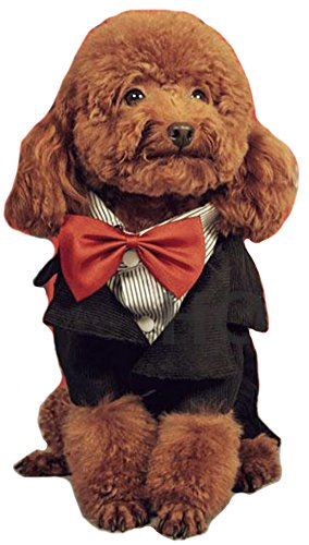 MaruPet Fashion Couture - Formal Tuxedo with Red Bow Tie for Small Dog Teddy Chihuahua Bichon frise Black M by MaruPet