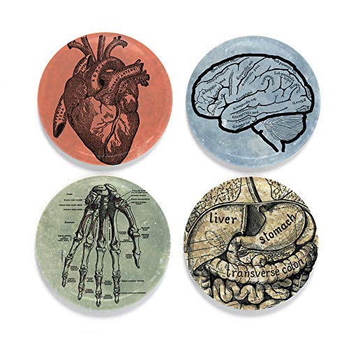Buttonsmith Science Anatomy Magnet Set - Set of 4 1.25