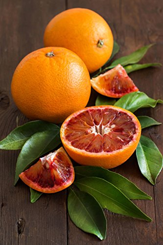 Tarocco Blood Orange Tree, Seedless Citrus (Excludes: CA,TX,LA,AZ)
