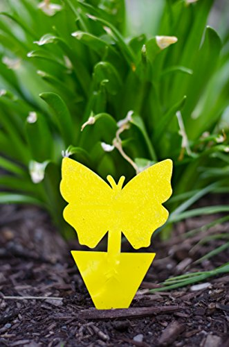 Leavemebe Gnat Trap Yellow Sticky Traps For Indoor Plants